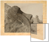 A Profile View of a Statue with a Rare Disk on the Earlobe Wood Print by Unknown Unknown