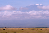 Mount Kilimanjaro Looms Above Zebras and Wildebeests Grazing in Amboseli National Park Photographic Print by Shannon Switzer