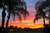 Silhouetted Palm Trees and a Colorful Sky over Coastal Homes at Sunset Photographic Print by Mike Theiss