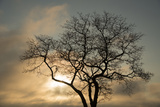 A White Oak Tree at Sunrise Photographic Print by Michael Melford