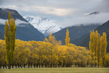 Cottonwoods and Willows in Autumn in the Matukituki River Valley Photographic Print by Michael Melford
