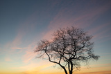 An Oak Tree on the Shore of Long Island Sound at Sunrise Photographic Print by Michael Melford