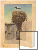 A Girl Stands Below a Good Luck Nest Built by the Stork on the Nest Wood Print by Eric Keast Burke