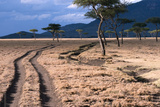 Wheel Ruts Through Acacia Trees in Masai Mara National Reserve Photographic Print by Shannon Switzer