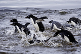 Adelie Penguins on Devil's Island in the Weddell Sea of Antarctica Photographic Print by Jim Richardson