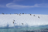Adelie Penguins on a Frozen Slope Photographic Print by Jim Richardson
