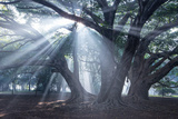 The Sun's Rays Shine Through Trees in Mist in Ibirapuera Park Photographic Print by Alex Saberi