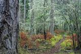 A Trail Through the Woods in the San Juan Islands Impressão fotográfica por Michael Melford