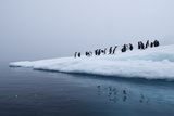 Gentoo Penguins Gather on Ice Photographic Print by Jim Richardson