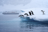 Gentoo Penguins Jump Off of the Ice into the Water Near a Cruise Ship Photographic Print by Jim Richardson