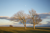 Trees Standing on the Shore of Long Island Sound at Harkness State Park Photographic Print by Michael Melford