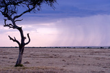 A Rain Storm Approaches a Lone Jackal in Masai Mara National Reserve Photographic Print by Shannon Switzer