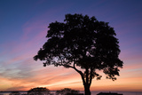 Silhouette of a White Oak Tree and Sunrise Above Long Island Sound Photographic Print by Michael Melford