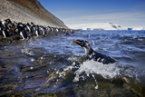 Adelie Penguins on Paulet Island, Antarctica Photographic Print by Jim Richardson