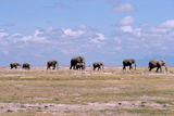 A Herd of Elephants Ambles in Line across the Plains in Amboseli National Park Photographic Print by Shannon Switzer