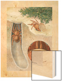 Painting of Spider in and Exiting its Shelter and Close-Up of the Eye Wood Print by Hashime Murayama