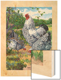 Three Silver-Laced Wyandottes Peck the Earth Wood Print by Hashime Murayama