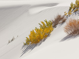 Cottonwood Trees with Fall Color and Salt Cedar in White Sands National Monument Photographic Print by Derek Von Briesen