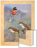 A Painting of Two Species of Cuckoo and a Coppery-Tailed Trogon Wood Print by Allan Brooks