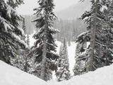 Evergreens at Ski Resort, Whistler, British Columbia, Canada Photographic Print by  Design Pics Inc