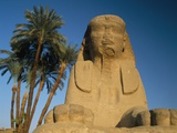 Sphinx Statue in Front of Date Palms Photographic Print by  Design Pics Inc