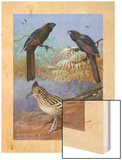 A Painting of a Smooth-Billed Ani, Groove-Billed Ani and a Roadrunner Wood Print by Allan Brooks