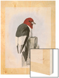 A Painting of a Red-Headed Woodpecker Perched on a Tree Stump Wood Print by Louis Agassi Fuertes