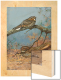 Painting of a Whippoorwill and a Chuck-Will'S-Widow Wood Print by Allan Brooks