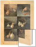 Painting of Several Spiders, Theridion Tepidariorum, at Work Wood Print by Hashime Murayama