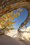 Cottonwood Tree with Fall Color in White Sands National Monument Photographic Print by Derek Von Briesen