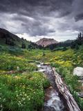 Wildflowers and Stream Near Black Bear Pass, San Juan Mountains Fotografisk tryk af Keith Ladzinski