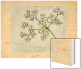 A Sprig of Mapleleaf Viburnum Blossoms Wood Print by Mary E. Eaton
