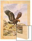A Golden Eagle Sinks its Talons into a Frightened Hoary Marmot Wood Print by Walter A. Weber