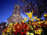Spring Flowers at the Priory, Holywood, County Down Photographic Print by Chris Hill