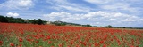 Looking across Field of Poppies to Small Village in Provence Photographic Print by  Design Pics Inc