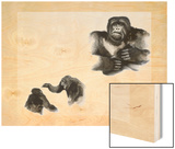 In Play and Display, Gorillas Seek an Outlet for Pent Up Energy Wood Print by George Founds