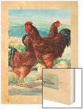 A View of Rhode Island Red Chickens with their Young Wood Print by Hashime Murayama