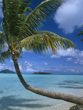 Palm Tree Leaning over Sea Photographic Print by  Design Pics Inc