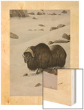 A Painting of a Musk-Ox Standing in the Snow Wood Print by Louis Agassi Fuertes
