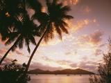 Palm Trees on Tropical Beach at Sunset, Nanuya Lai Lai Photographic Print by  Design Pics Inc
