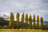 Willows in a Row in the Matukituki River Valley Photographic Print by Michael Melford