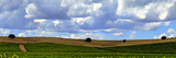 Landscape of Vineyards and Hill-Top Trees under a Sky with Fluffy White Clouds Photographic Print by Babak Tafreshi