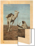 A Man Takes a Break with His White Camel Wood Print by Franklin Price Knott
