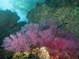 A Coral Formation Lámina fotográfica por Cesare Naldi