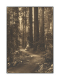 A Path Winds Through the Magnificent Sunlit Giant Forest Wood Print by Lindley Eddy