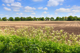 Countryside Landscape with Weed and Cultivated Farm Field Photographic Print by Peter Wollinga