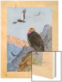 A Painting of Adult and Immature California Condors Wood Print by Allan Brooks