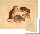A Painting of Four Rat Species Wood Print by William H. Bond