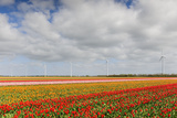 Tulip Fields in Holland Photographic Print by  AndreAnita