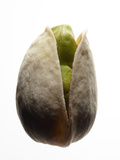A Pistachio Nut Photographic Print by Rebecca Hale